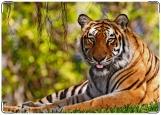 Обложка на паспорт с уголками, тигр в лесу