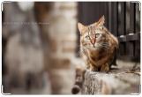 Обложка на ветеринарный паспорт, cat