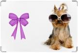 Обложка на ветеринарный паспорт, В очках
