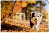 Обложка на ветеринарный паспорт, Осень