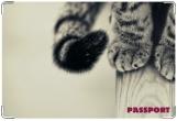 Обложка на ветеринарный паспорт, Барсик