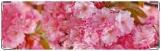 Визитница/Картхолдер, розовые цветы