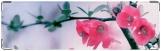 Визитница/Картхолдер, цветочки
