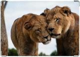Блокнот, lion