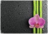 Обложка на паспорт, Орхидея на черном фоне