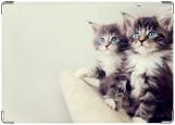 Обложка на паспорт, котятки