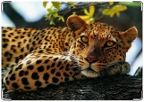 Обложка на паспорт, леопард