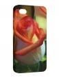 Чехол iPhone 4/4S, Роза
