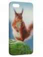 Чехол для iPhone 5/5S, Белочка