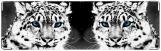 Визитница/Картхолдер, тигр
