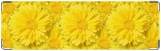 Визитница/Картхолдер, Желтые цветы.