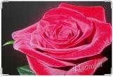 Обложка для свидетельства о рождении, Rose_rose