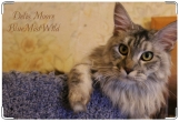 Обложка на ветеринарный паспорт, Delis