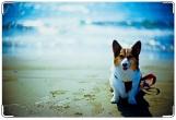 Обложка на ветеринарный паспорт, собака