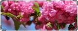 Обложка на студенческий, Цветы сакуры