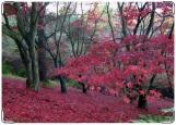 Обложка на паспорт с уголками, Осень в красном цвете