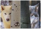 Обложка на паспорт с уголками, Волки, самые верные животные