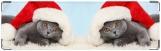 Визитница/Картхолдер, котик в шапке