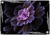 Блокнот, Цветы