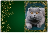 Обложка на ветеринарный паспорт, Британец вислоухий