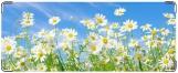 Кошелек, Цветы полевые