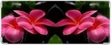 Обложка на студенческий, Розовые цветы