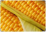 Обложка на паспорт, кукуруза