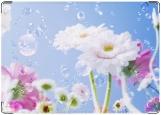 Обложка на права, Летние цветы