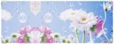 Обложка на зачетную книжку, Летние свежие цветы