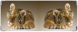 Кошелек, Тигрь