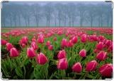 Обложка на паспорт с уголками, розовые тюльпаны