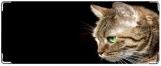 Кошелек, Кот