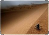 Обложка на паспорт с уголками, Паучёк в пустыне.