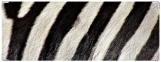 Обложка на зачетную книжку, зебра2