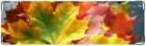 Визитница/Картхолдер, Осень