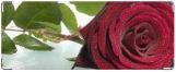 Кошелек, Rose