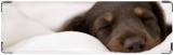 Визитница/Картхолдер, спящий пушистик