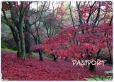 Обложка на паспорт с уголками, red autumn