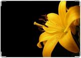 Обложка на автодокументы с уголками, лилия