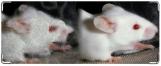 Кошелек, мышка