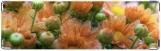 Визитница/Картхолдер, Оранжевые хризантемы