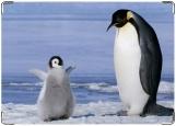 Обложка на паспорт с уголками, Пингвинчики