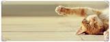 Обложка на зачетную книжку, рыжий кот