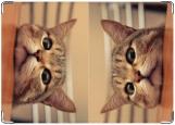 Обложка на паспорт с уголками, Кот