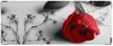 Кошелек, Роза
