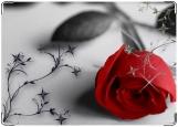 Обложка на права, Роза