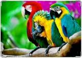 Обложка на паспорт с уголками, Тропические попугаи