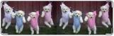 Визитница/Картхолдер, Сушилка для собак