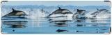 Визитница/Картхолдер, Дельфины