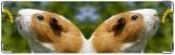 Визитница/Картхолдер, Морская свинка